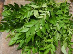 Fresh Curry Leaves bag