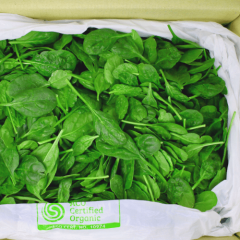 Fresh Baby Spinach Box 1.5kg